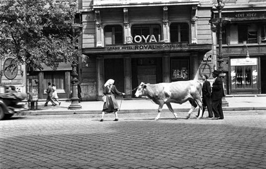 1946, Erzsébet körút, 7. kerület
